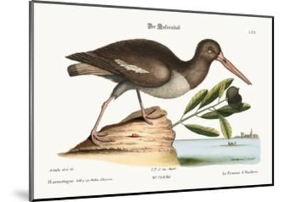 The Oyster Catcher, 1749-73-Mark Catesby-Mounted Giclee Print