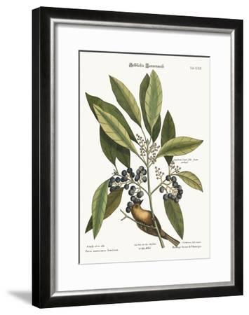 The Pine-Creeper, 1749-73-Mark Catesby-Framed Giclee Print