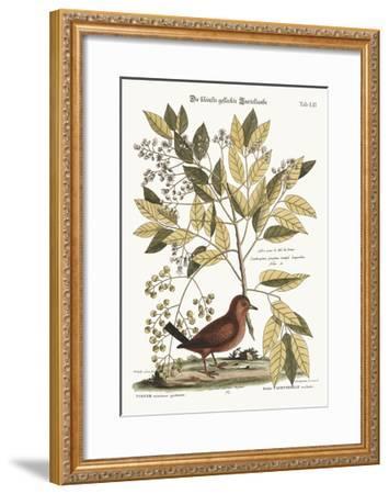 The Ground Dove, 1749-73-Mark Catesby-Framed Giclee Print