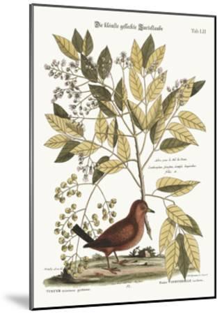 The Ground Dove, 1749-73-Mark Catesby-Mounted Giclee Print