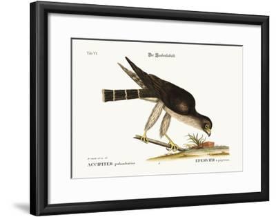 The Pigeon Hawk, 1749-73-Mark Catesby-Framed Giclee Print