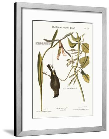 The Yellow-Rump, 1749-73-Mark Catesby-Framed Giclee Print
