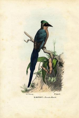 Motmot, 1863-79-Raimundo Petraroja-Stretched Canvas Print
