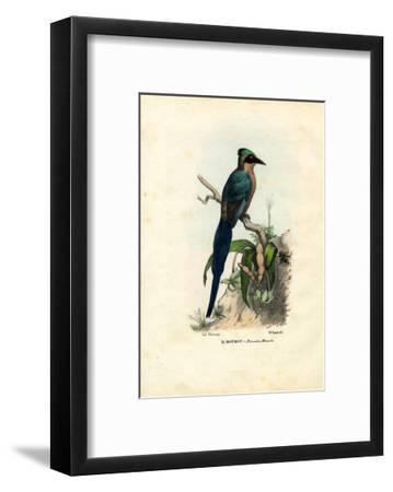 Motmot, 1863-79-Raimundo Petraroja-Framed Giclee Print