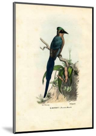 Motmot, 1863-79-Raimundo Petraroja-Mounted Giclee Print