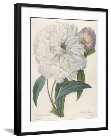 Paeonia Flagrans (Peony), 1827-Pierre Joseph Redoute-Framed Giclee Print