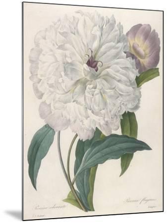 Paeonia Flagrans (Peony), 1827-Pierre Joseph Redoute-Mounted Giclee Print