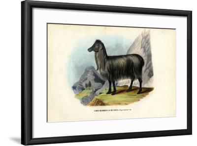 Feral Goat, 1863-79-Raimundo Petraroja-Framed Giclee Print