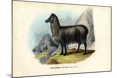 Feral Goat, 1863-79-Raimundo Petraroja-Mounted Giclee Print
