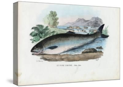 Atlantic Salmon, 1863-79-Raimundo Petraroja-Stretched Canvas Print