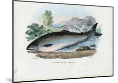 Atlantic Salmon, 1863-79-Raimundo Petraroja-Mounted Giclee Print