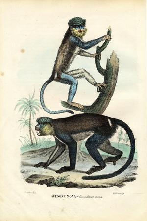 Mona Monkey, 1863-79-Raimundo Petraroja-Stretched Canvas Print