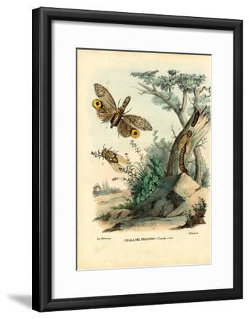 Peanut-Head Bug, 1863-79-Raimundo Petraroja-Framed Giclee Print