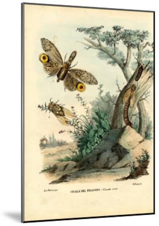 Peanut-Head Bug, 1863-79-Raimundo Petraroja-Mounted Giclee Print