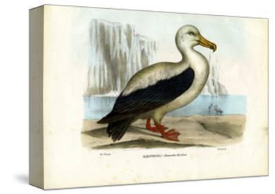 Royal Albatross, 1863-79-Raimundo Petraroja-Stretched Canvas Print