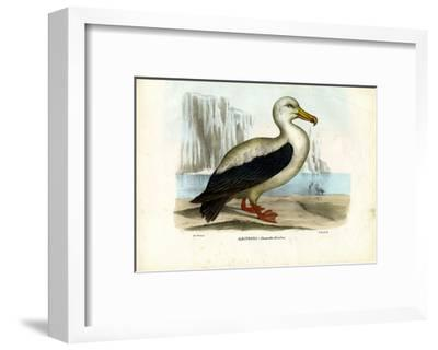 Royal Albatross, 1863-79-Raimundo Petraroja-Framed Giclee Print