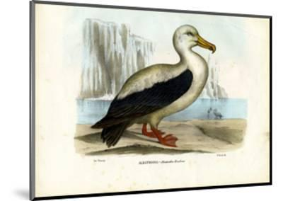 Royal Albatross, 1863-79-Raimundo Petraroja-Mounted Giclee Print