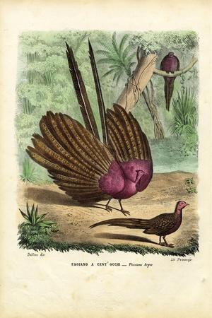 Argus Pheasant, 1863-79-Raimundo Petraroja-Stretched Canvas Print