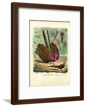 Argus Pheasant, 1863-79-Raimundo Petraroja-Framed Giclee Print
