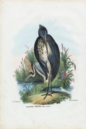 Grey Heron, 1863-79-Raimundo Petraroja-Stretched Canvas Print