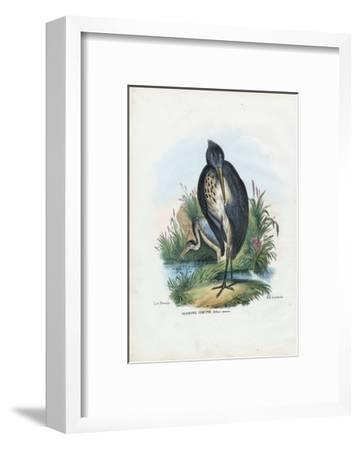 Grey Heron, 1863-79-Raimundo Petraroja-Framed Giclee Print