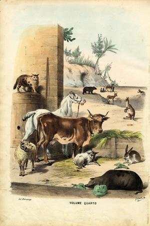 Title Page, 1863-79-Raimundo Petraroja-Stretched Canvas Print