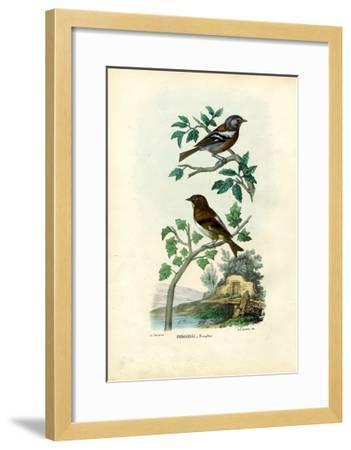 Chaffinch, 1863-79-Raimundo Petraroja-Framed Giclee Print