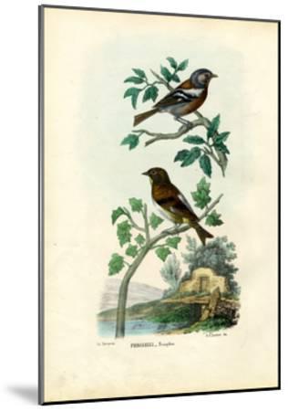 Chaffinch, 1863-79-Raimundo Petraroja-Mounted Giclee Print