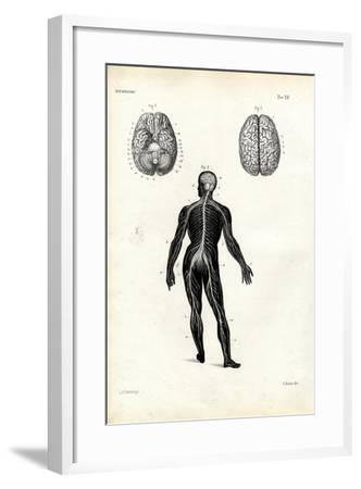 Brain, 1863-79-Raimundo Petraroja-Framed Giclee Print