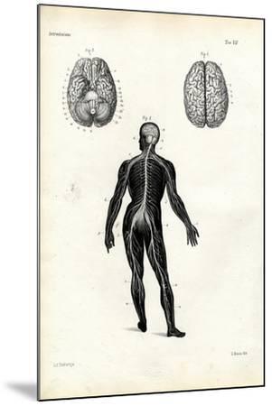 Brain, 1863-79-Raimundo Petraroja-Mounted Giclee Print