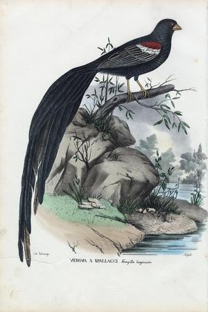 Siberian Finch, 1863-79-Raimundo Petraroja-Stretched Canvas Print
