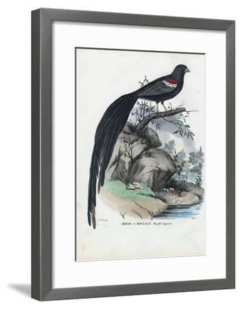 Siberian Finch, 1863-79-Raimundo Petraroja-Framed Giclee Print
