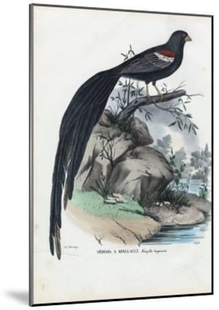 Siberian Finch, 1863-79-Raimundo Petraroja-Mounted Giclee Print