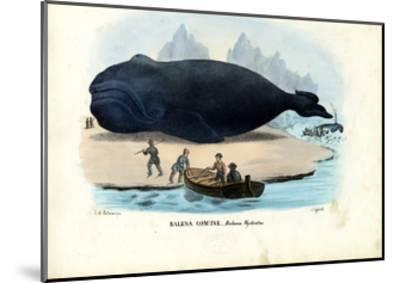 Bowhead Whale, 1863-79-Raimundo Petraroja-Mounted Giclee Print