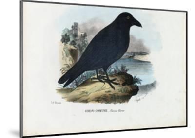 Raven, 1863-79-Raimundo Petraroja-Mounted Giclee Print