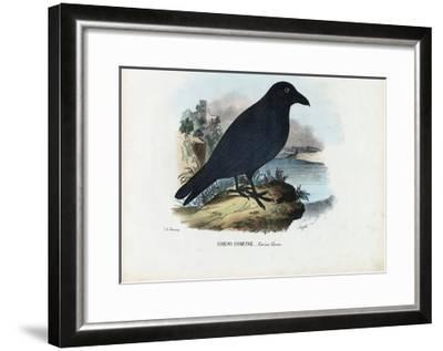 Raven, 1863-79-Raimundo Petraroja-Framed Giclee Print
