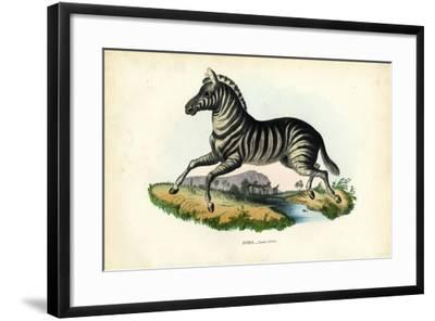 Zebra, 1863-79-Raimundo Petraroja-Framed Giclee Print