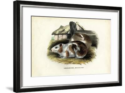 Cavy, 1863-79-Raimundo Petraroja-Framed Giclee Print