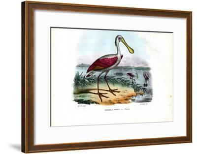 Spoonbill, 1863-79-Raimundo Petraroja-Framed Giclee Print