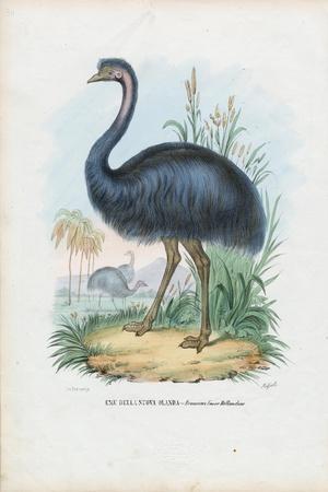 Emu, 1863-79-Raimundo Petraroja-Stretched Canvas Print
