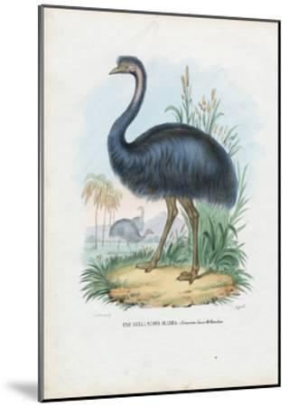 Emu, 1863-79-Raimundo Petraroja-Mounted Giclee Print