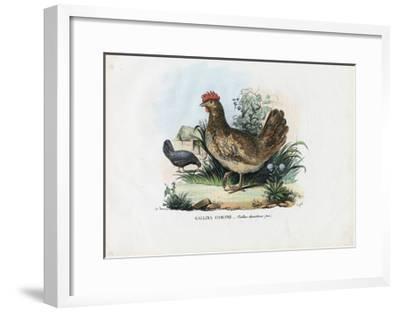 Hen, 1863-79-Raimundo Petraroja-Framed Giclee Print
