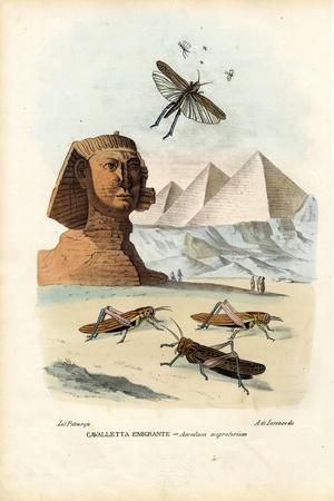 True Crickets, 1863-79-Raimundo Petraroja-Stretched Canvas Print