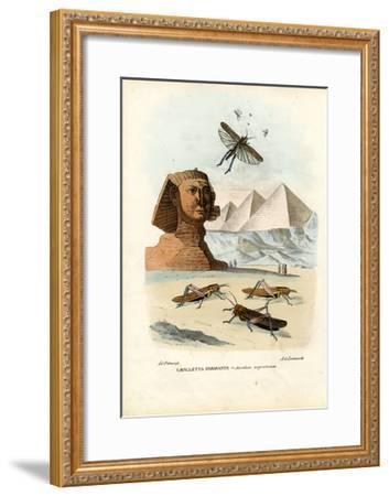 True Crickets, 1863-79-Raimundo Petraroja-Framed Giclee Print