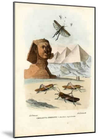 True Crickets, 1863-79-Raimundo Petraroja-Mounted Giclee Print