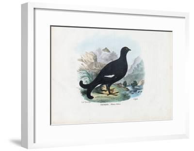 Black Grouse, 1863-79-Raimundo Petraroja-Framed Giclee Print