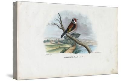 European Goldfinch, 1863-79-Raimundo Petraroja-Stretched Canvas Print