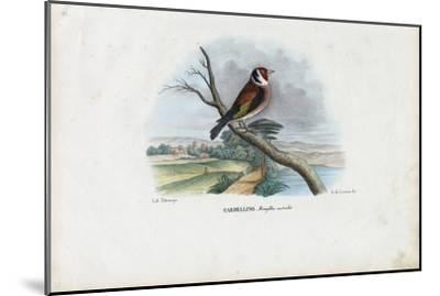 European Goldfinch, 1863-79-Raimundo Petraroja-Mounted Giclee Print