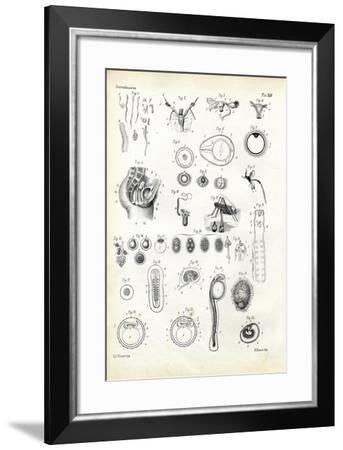 Reproductive Organ, 1863-79-Raimundo Petraroja-Framed Giclee Print
