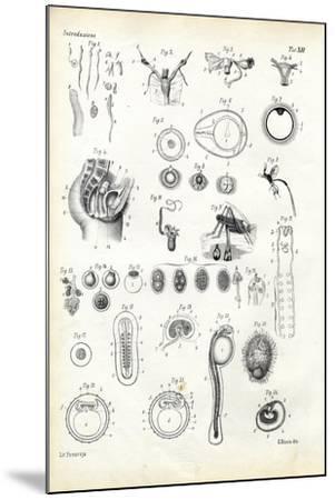 Reproductive Organ, 1863-79-Raimundo Petraroja-Mounted Giclee Print